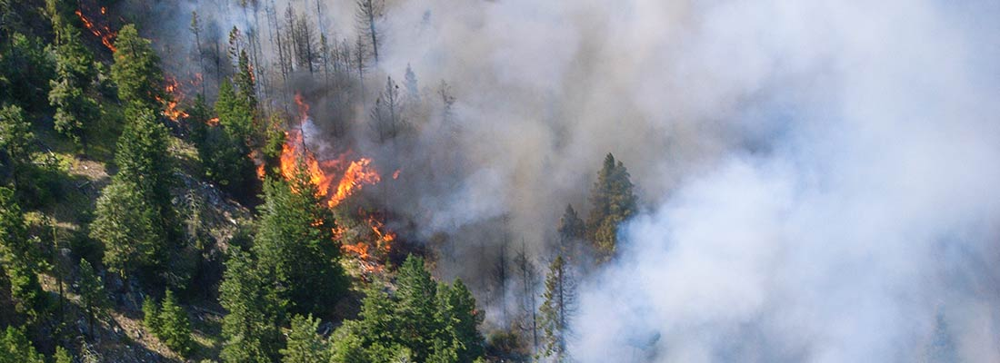 Wildfire burns California forest